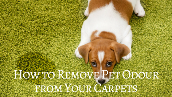How to Remove Pet Odour from Your Carpets
