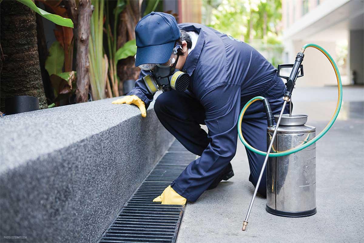 Pest controlling services